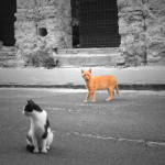 Eke Tamás: Városi oroszlán, Budapest [Város lakói]